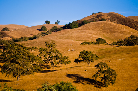 Golden Hills (Hollister, California)